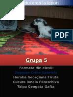 Grupa 5.ppt