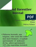 Mediul Forestier Boreal