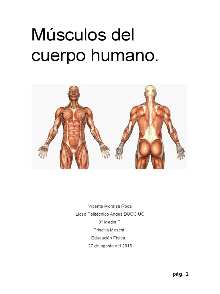 Moderno AnatomÃa Muscular Hoja De Etiquetado Festooning - hoja de ...