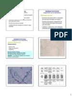 Dx Dermatomicosis
