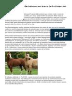 Animalistas Centro De Informacion Acerca De La Proteccion A Los Animales
