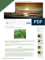 Como Preparar Insecticida Casero de Neem _ Libros Del Agro