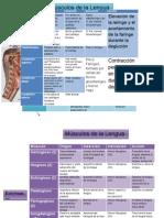 Anatomia Musculos.docx