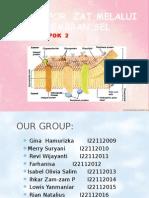 Kelompok 2 Transportasi Zat Melalui Membran