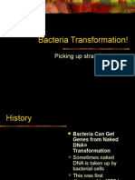 BacteriaTransformation ppt
