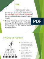 6-energy pyramid  1