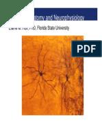 Basic Neuroanatomy Neurophysiology Russia