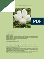 Ficha tÉcnica Del Cultivo Del Algodonero