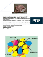 rocas detriticas