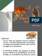 Pulga y Garrapatas