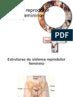 02 - AULA 01 - Sistema Reprodutor Feminino