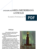Degradarea microbiana a sticlei.ppt