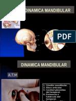dinamicamandibular-.ppt