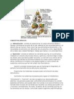 Nutrición, conceptos básicos