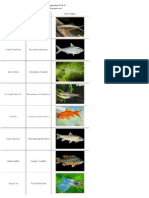 List of Freshwater Fish Beginning With G
