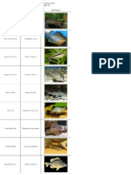 List of Freshwater Fish Beginning With P