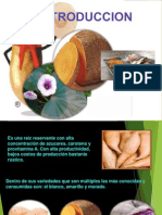 CAMOTE - ORIGEN VARIEDADES.pdf