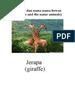 Gambar Dan Nama Nama Hewan