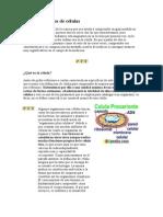 Concepto y Tipos de Células