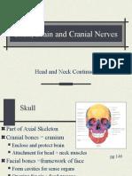 Skull, Brain, CN