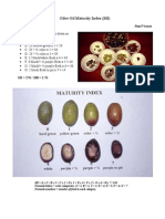 Olive Oil Maturity Index