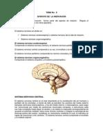 TEMA 8 Anatomía Humana