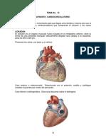 TEMA 13 Anatomía Humana