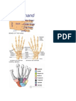 Anatomy of Wrist and Hand