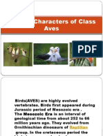 General Characters of Class Aves