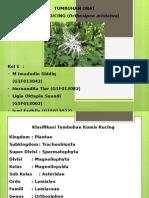 botani kelompok 1.pptx