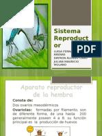 Sistema Reproductor insectos