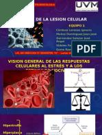 Causas de la Lesion Celular
