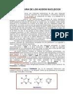 Quimica Acidos Nucleicos 2014