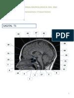 Rm 3 Anatomia Snc