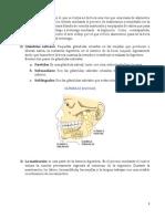 aparato digestivo (Recuperado)