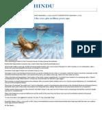 01.09.2015 Fossils Show Big Bug Ruled the Seas 460 Million Years Ago - The Hindu