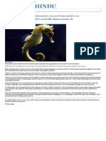 02.09.2015 Seahorse Dads Nurture Babies Much Like Human Moms Do - The Hindu