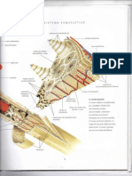 Anatomía sistema esqueletico