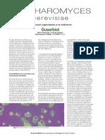 sacaromisis.pdf