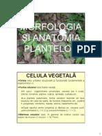 Morfologia Şi Anatomia Plantelor