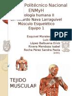 Músculo Esqueletico