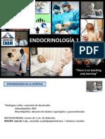 9_Endocrino1