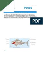 Biologia de los Peces