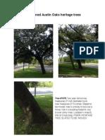 Threatened Austin Oaks Heritage Trees