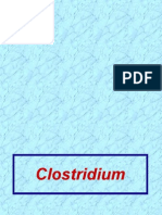 LecturePP17&18Clostridium