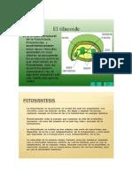 fotosisntesis 2