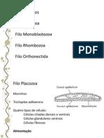 07.Mesozoários,CnidariaeCtenophora