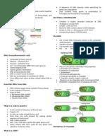 Bacter Gene