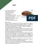 BIZCOCHO CEBRA (VAINILA Y CHOCOLATE)