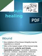 paw wound healing.pptx